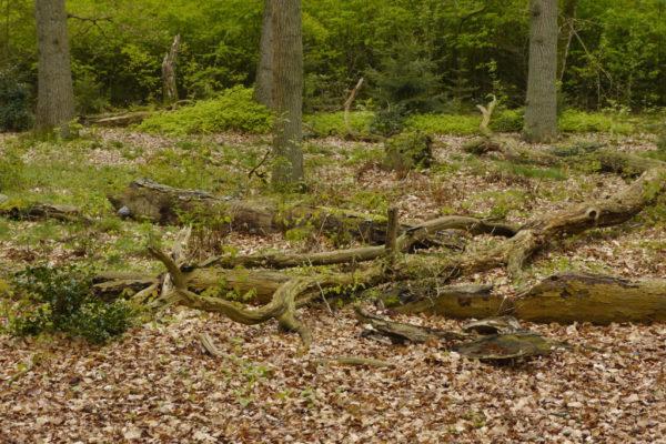 Loopbaanswitch wandelcoaching in de natuur voor meer rust, energie en inzicht.