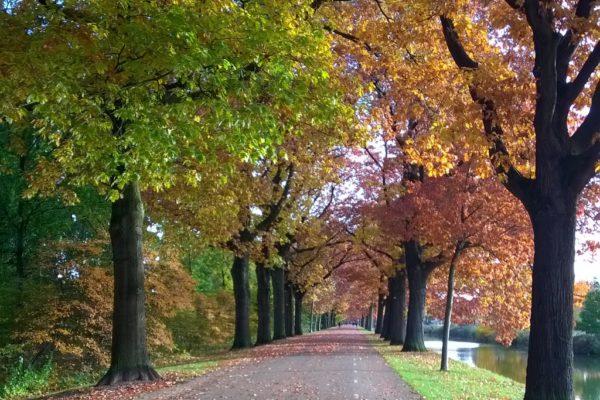 Herfst: Tijd van loslaten @ Loopbaanswitch