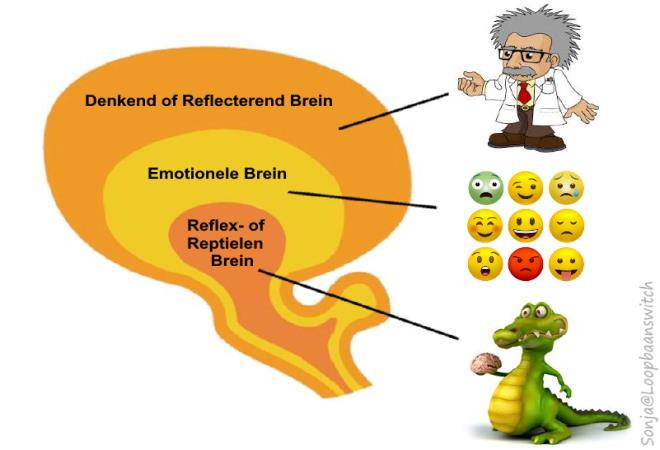 Uitleg van het brein @ loopbaanswitch
